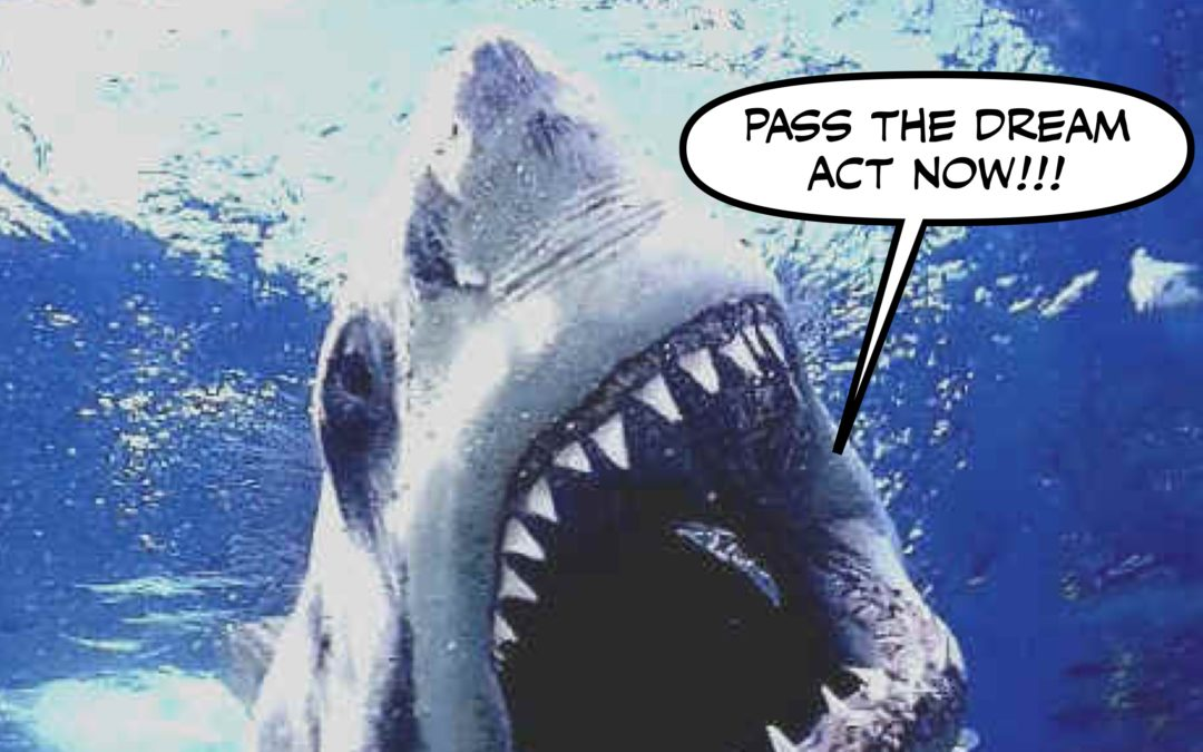 Shower Cap's Shithole Shutdown Shpectacular! (And Shark Show!)